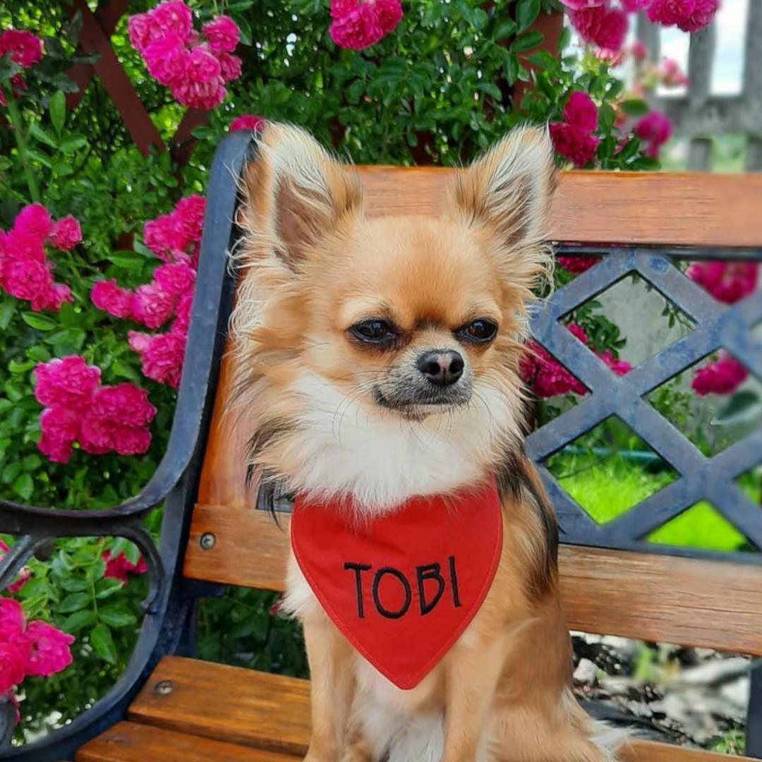 Bandana dla psa z imieniem czerwona